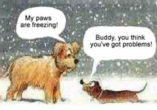 my-paws-are-freezing