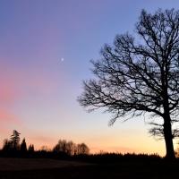 Frostig kväll